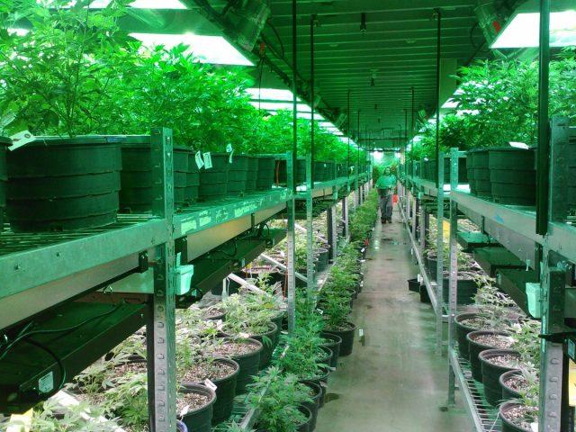cbd-thc-synthetic-cannabis-marijuana-pot-k2-spice