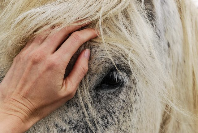 equine-therapy-horse-drug-rehab-fequently-unsuccessful-body-broker