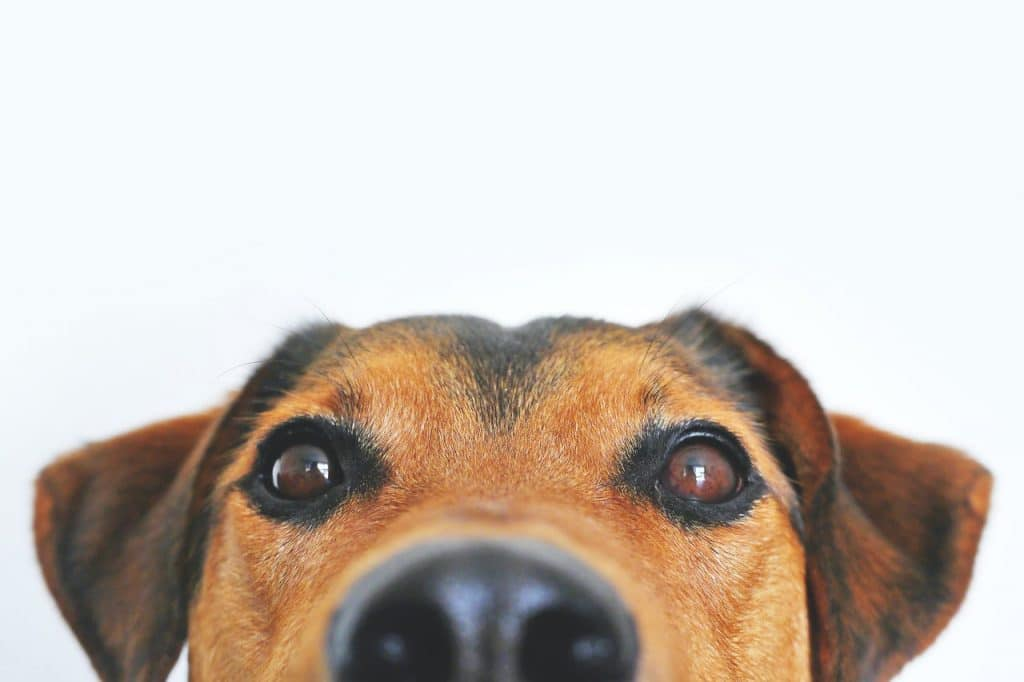 sniffer-dog-owners-drug-dogs-trained-sense-of-smell-illegal-drugs-training-a-puppy
