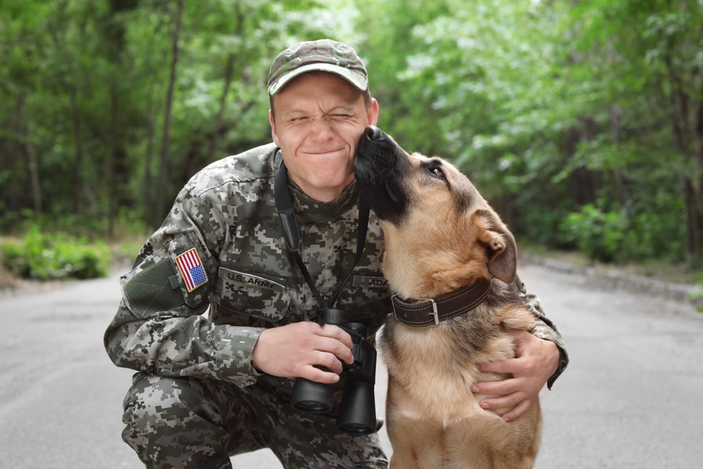drug-sniffing-dogs-trained-military-training-police-dog-handling-house-training-law-enforcement-k9-unit