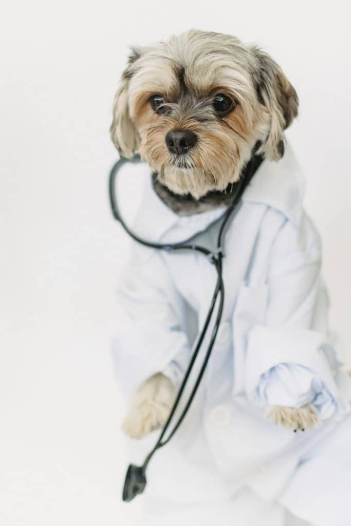 drug-sniffing-dogs-disease-detection-public-health-safety-doctor-dog-cute-puppy